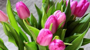 flower-2111554_960_720