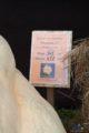 parszczyce-doynki-wojewdztwa-pomorskiego_53_2018-09-16_44004879594_o