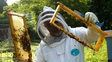 beekeeper-682943_1280